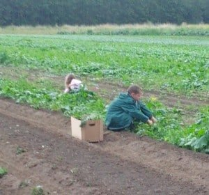 Buy Organic? Our Balance…