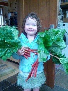Rhubarb Bounty!