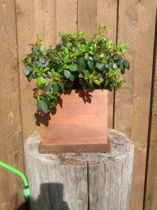 Wood Flower Pot Makeover