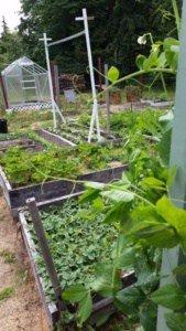 Right Garden