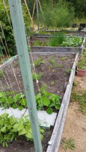 Center of Garden