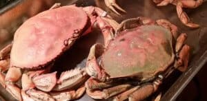 Crabs and mallet